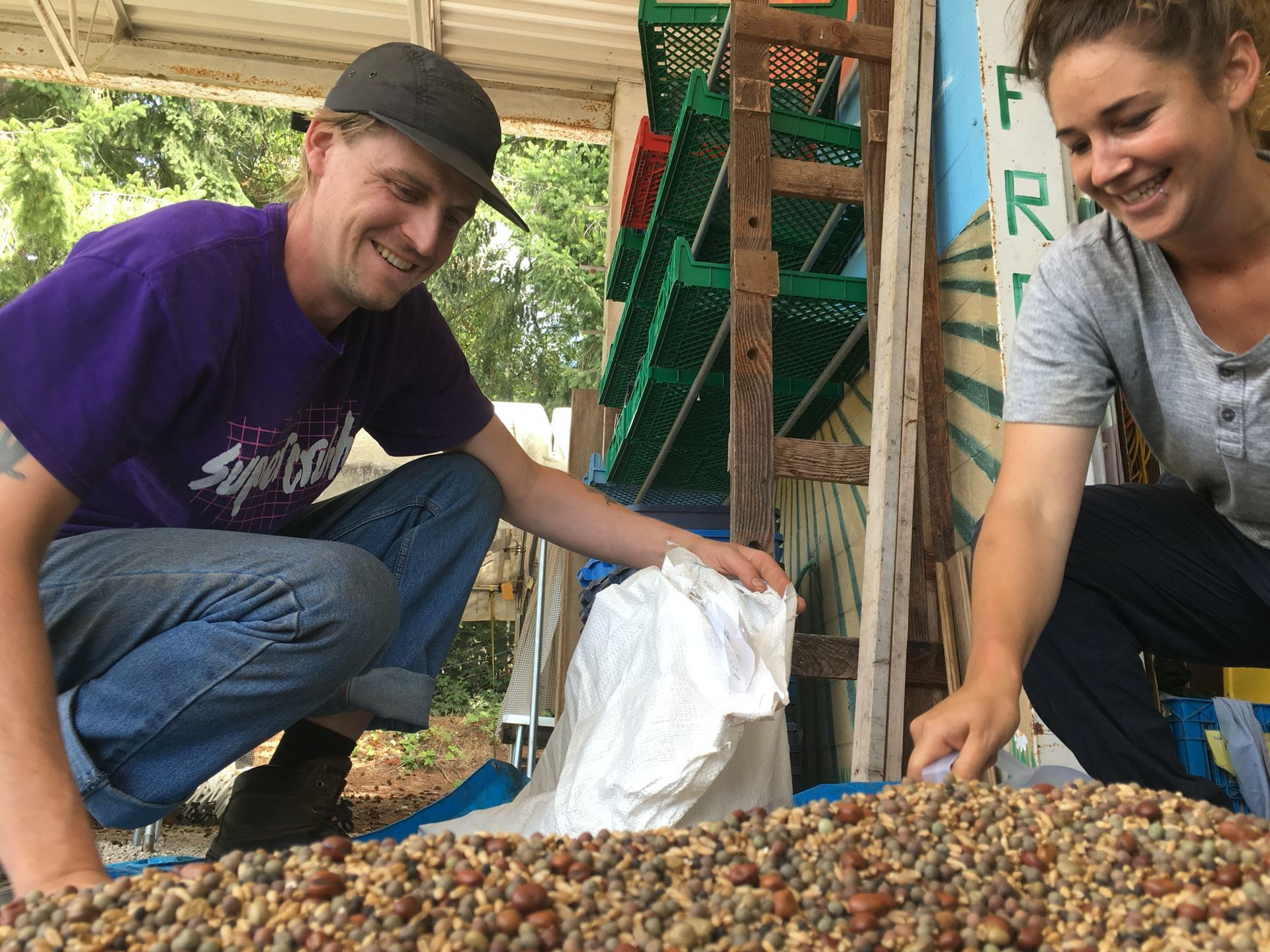 Mixing cover crop seeds with UBC Farm Practicum students