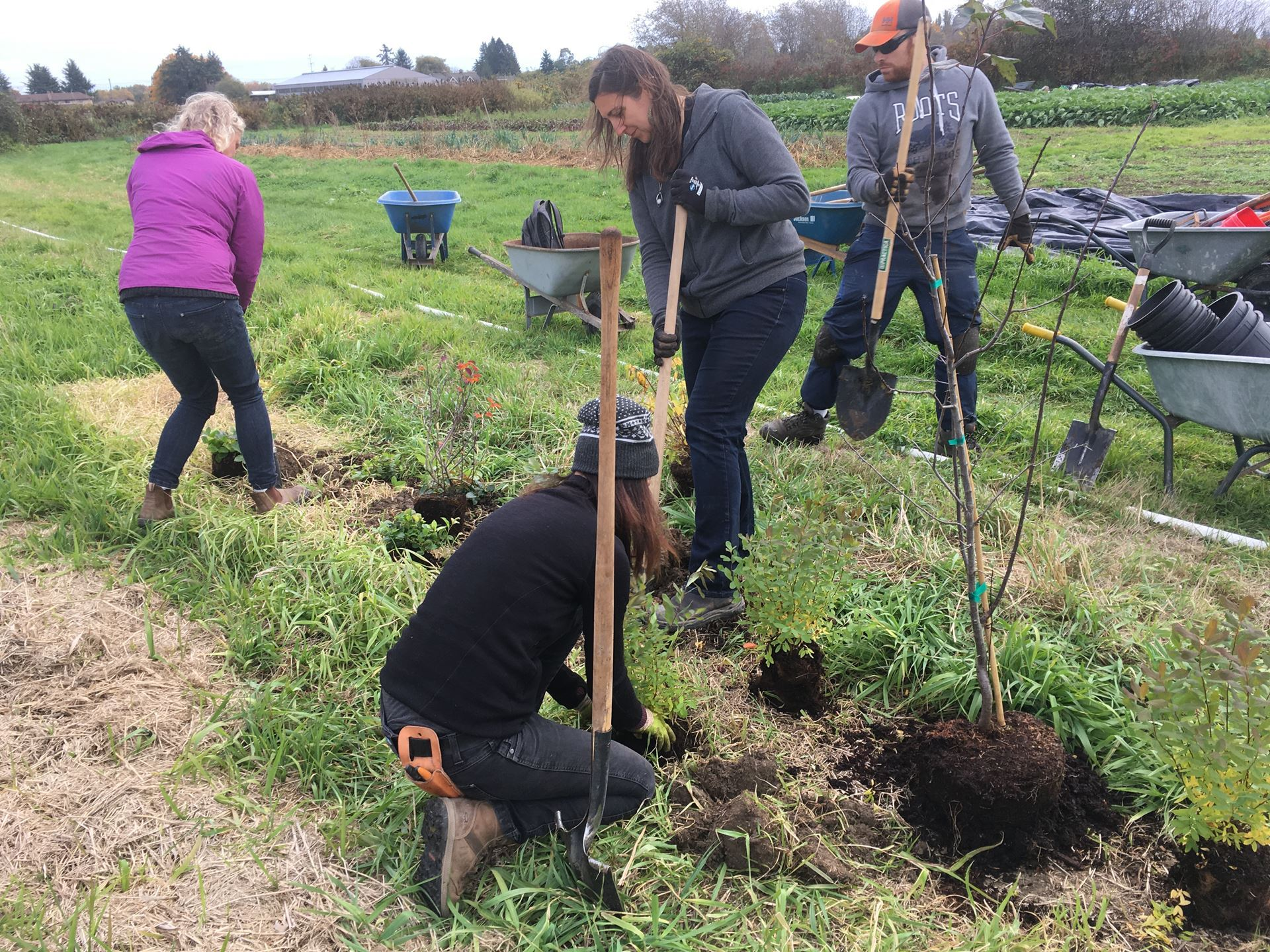 UBC Horticulture Training Program students planting our first native pollinator hedgerow